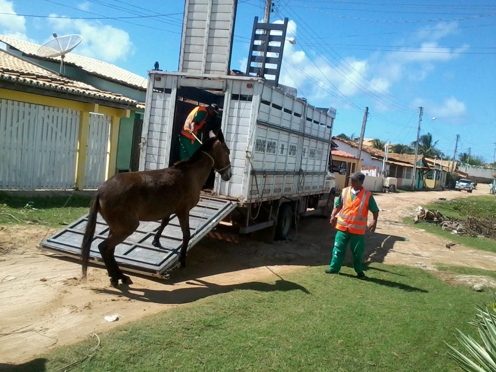 ENTRE RIOS ANIMAIS 1