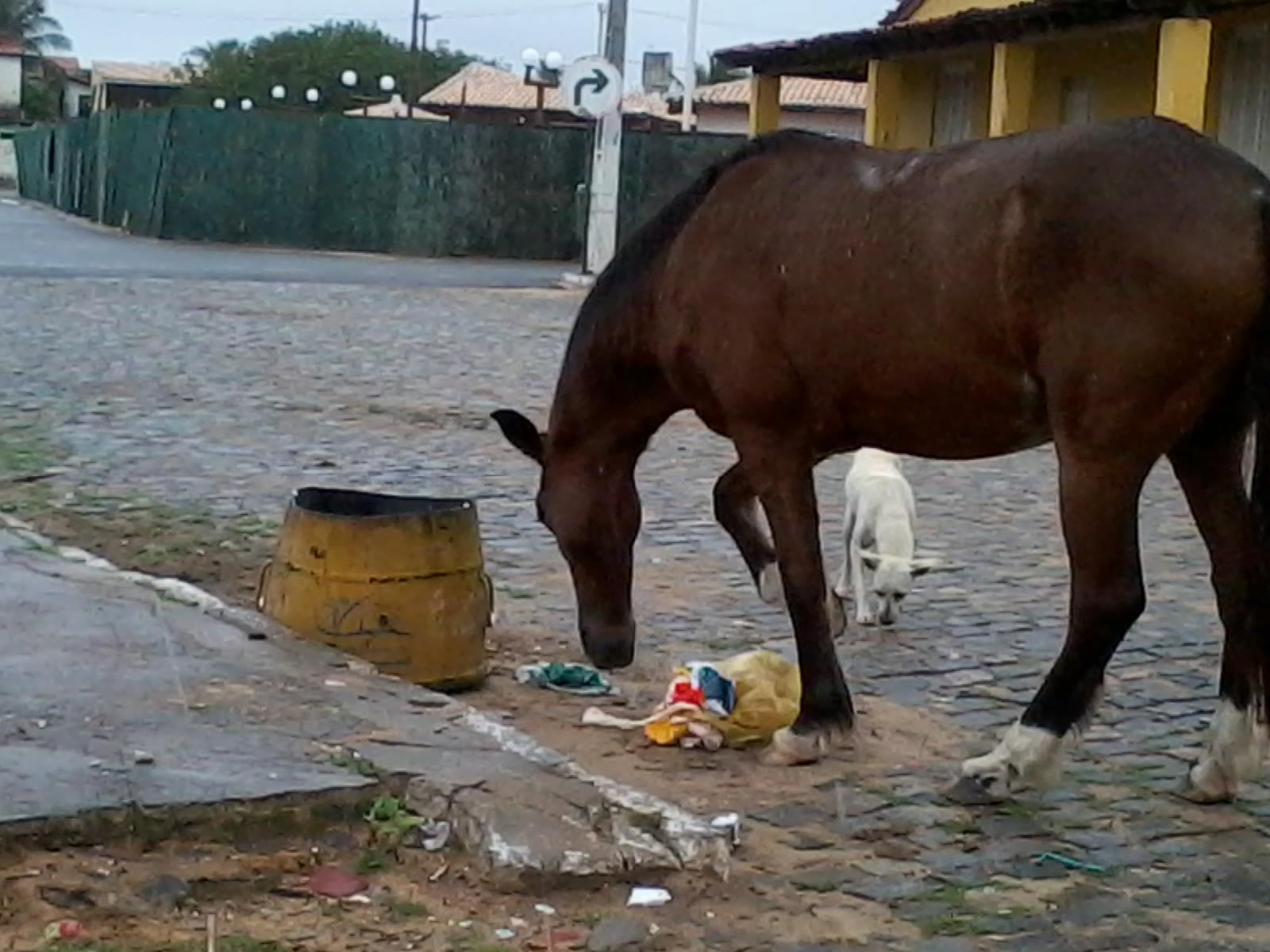 ENTRE RIOS ANIMAIS 2