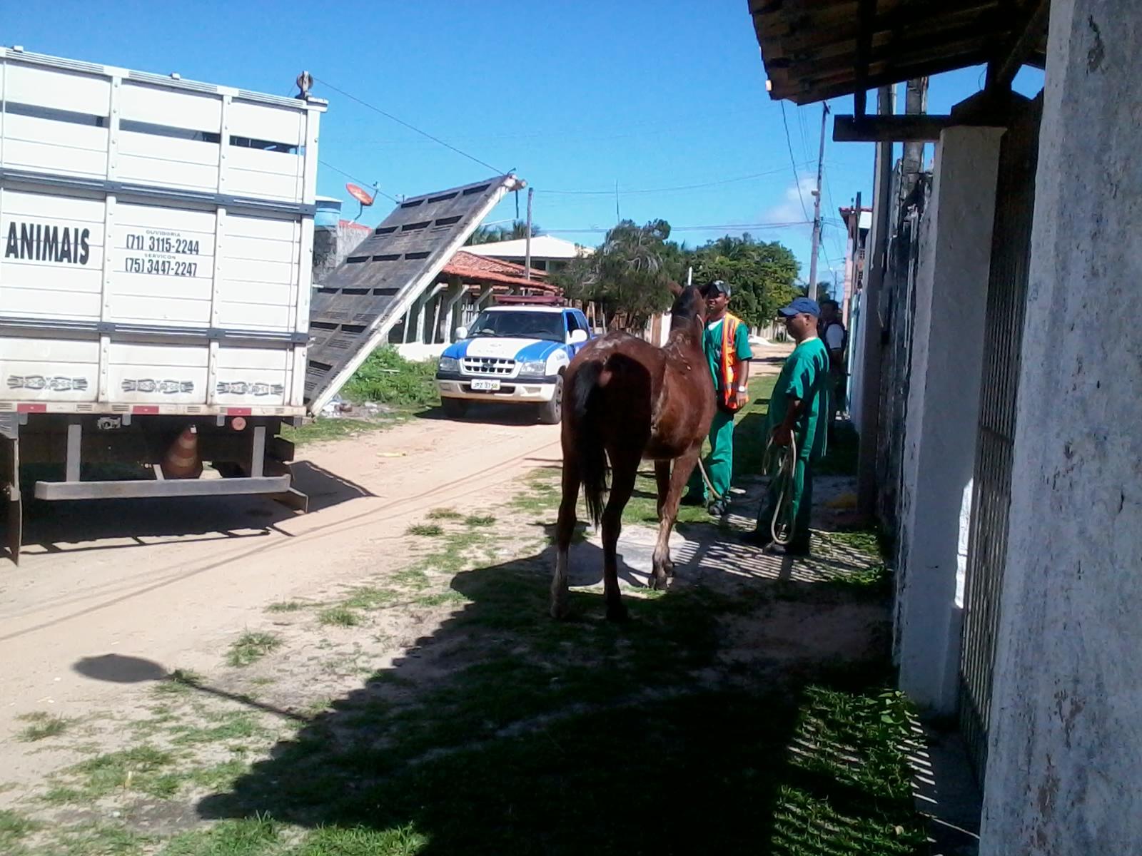 ENTRE RIOS ANIMAIS 3